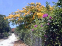 Les plantes et fleurs de la Guadeloupe